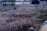 Fenced Half Plot Of Land At Ashaley Botwe Zoomlion Accra 79 4 T