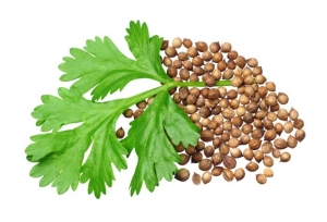 Coriander: Health Benefits Of Coriander