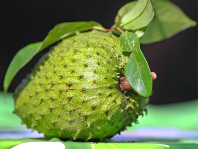 Soursop: Health Benefits Of Soursop