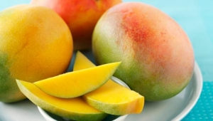 11 Top mango fruit information you must know