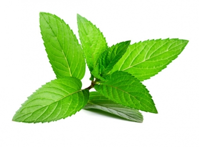 Peppermint: Health Benefits of Peppermint leaves